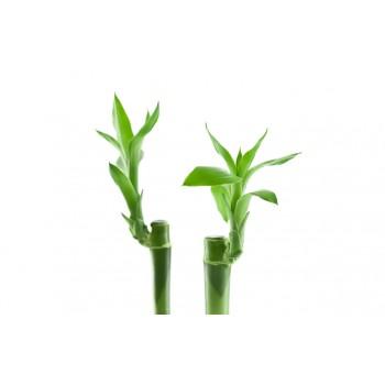 Подушка Billerbeck Bamboo 70/70 см.
