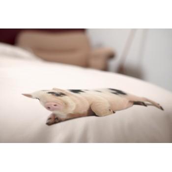 Двуспальный комплект постельного белья SNURK Поросенок розовый 200/220 см.